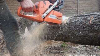 Спил, удаление деревьев, удаление пней от компании Лесобор