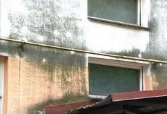 ТД Стройдинг предлагает эффективный способ удаления песени на фасаде дома