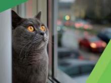 Как оградить домашнего питомца от выпадения из окна?