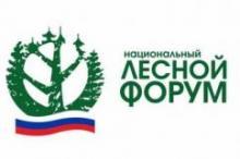 Национальный лесной форум впервые пройдет в Красноярске